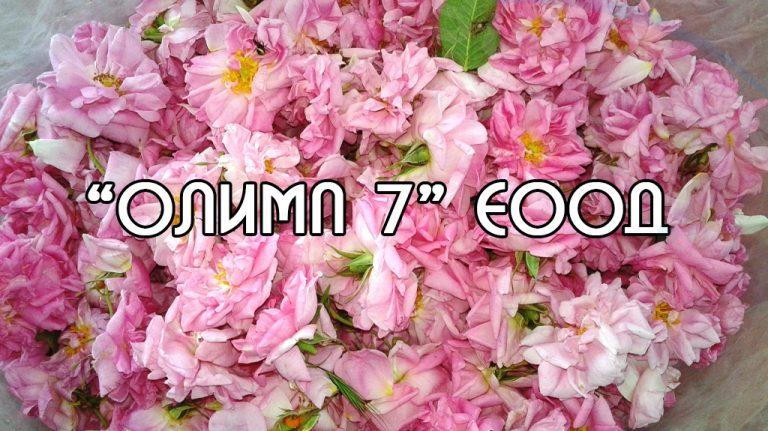 ОЛИМП 7 ЕООД